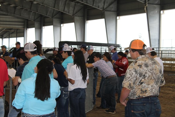 COMPETING IN LIVESTOCK JUDGING, AG MECHANICS AT ROBSTOWN HIGH SCHOOL