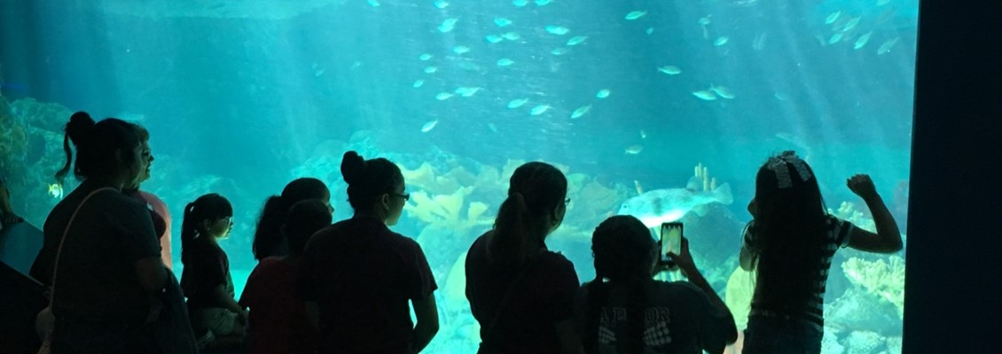 PROJECT SMART VISIT TEXAS STATE AQUARIUM